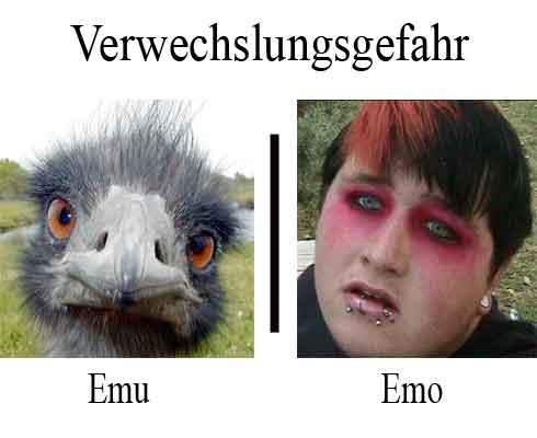 verwechslungsgefahr-Emo-Emu
