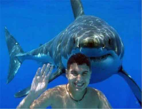 shark-attack-people-die