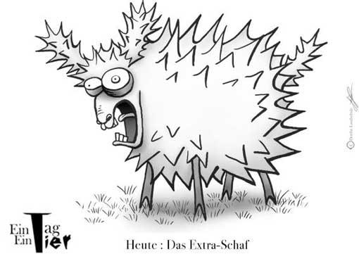 extra schaf Das Extra Schaf