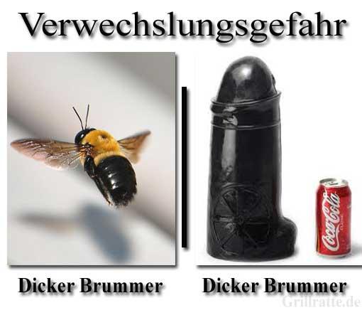 dicker-brummer