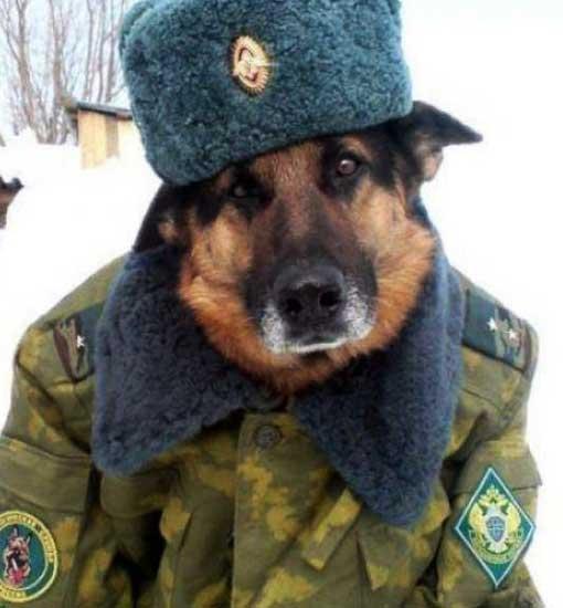 soldatenhund