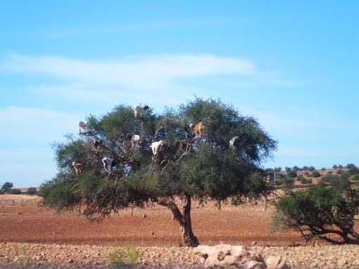 weihnachtsbaum-in-afrika