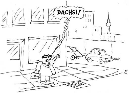 dachsi