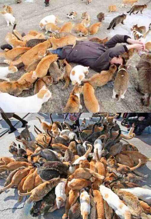 angriff-der-katzengang