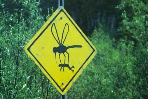 fauna in fukushima