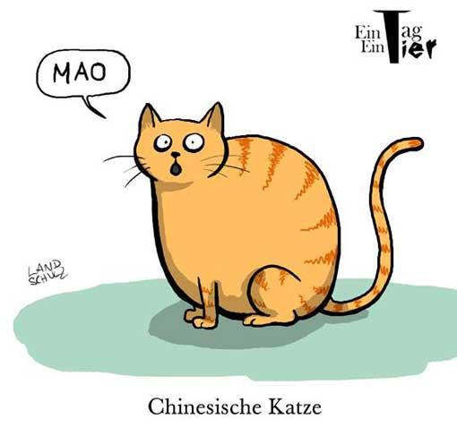 chinesische-katze