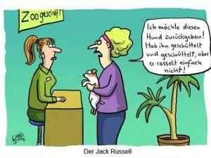jack-russel