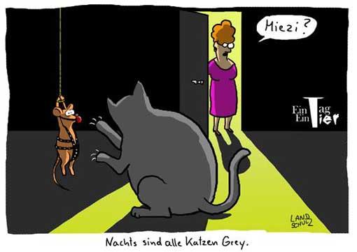 katz-of-grey