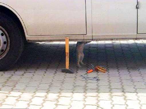 tierischer mechaniker