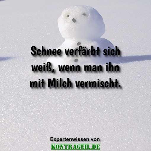 schneewissen
