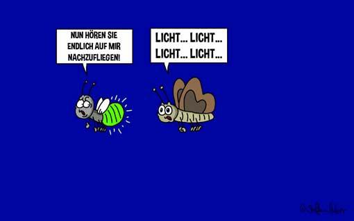 tierscherzgebiet-der-leuchtkaefer